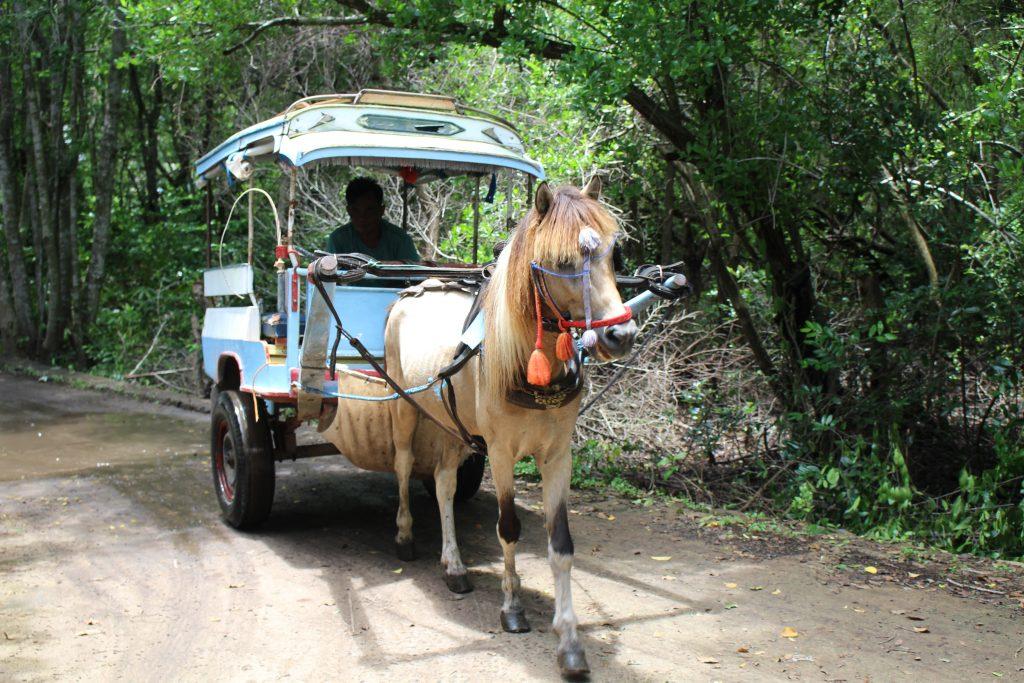 horse coach on Gili Meno