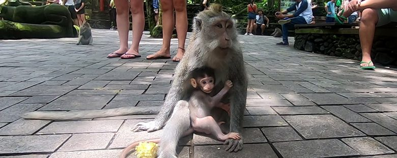 at the Sacred Monkey Forest