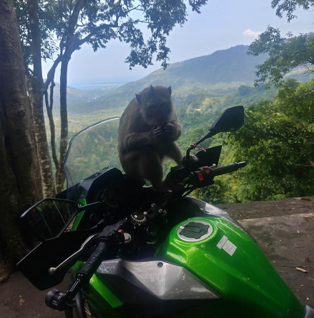 Monkey on the bike