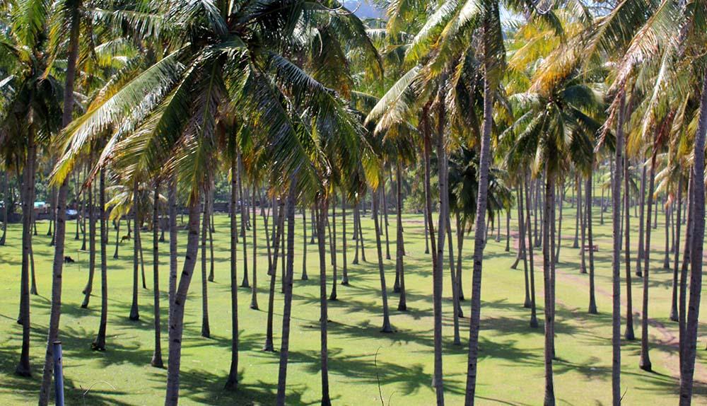 we love palmtrees!