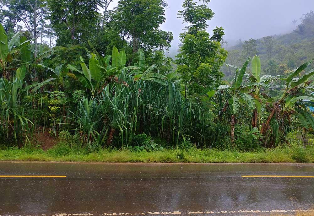 welcome in the rainy season