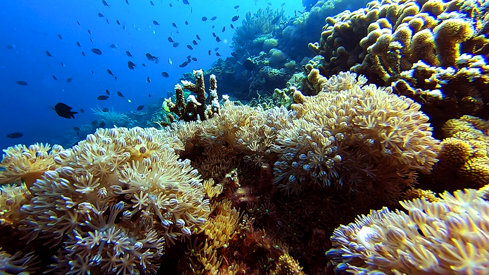 an amazing coral reef