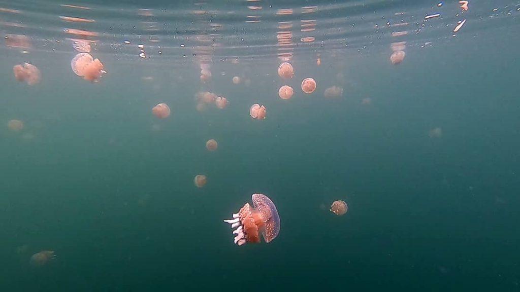so many jellyfish